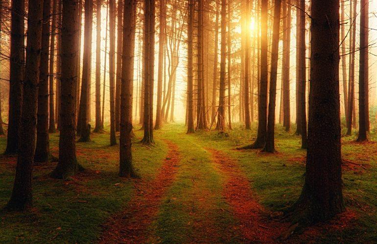 Prévoyez un séjour en forêt pour vous ressourcer