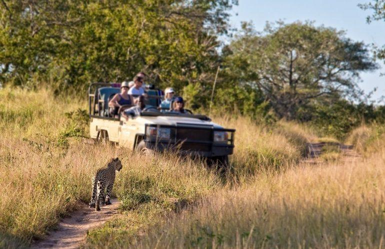 Safari en Afrique du Sud : les plus beaux endroits à explorer